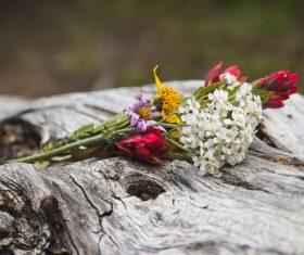 Fresh flowers on trunk Stock Photo