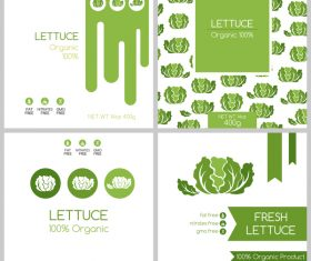 Fresh lettuce package box template vector