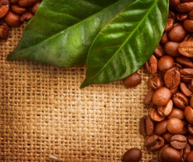 Grains of coffee with leaves Stock Photo  (2)