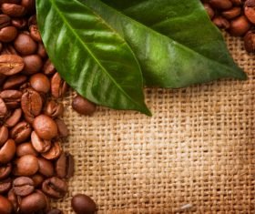 Grains of coffee with leaves Stock Photo  (4)