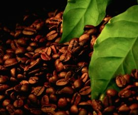 Grains of coffee with leaves Stock Photo  (8)