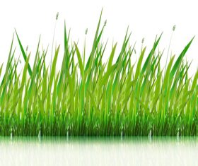 Green grass with grass seeds vector 01
