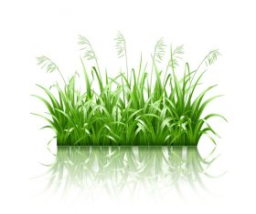 Green grass with grass seeds vector 02