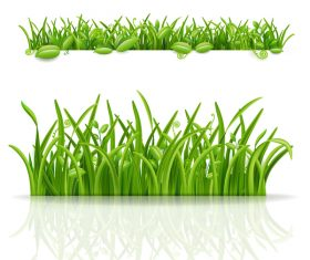 Green grass with leaves vector illustration 02