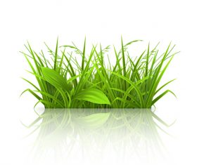 Green grass with leaves vector illustration 03