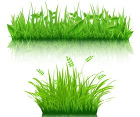 Green grass with leaves vector illustration 04