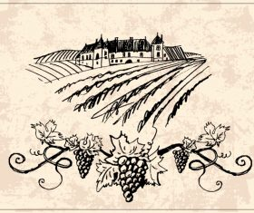 Hand drawn vineyard vector 04