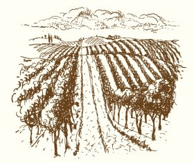 Hand drawn vineyard vector 05