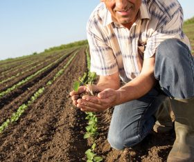 Hand holding seedlings of farmers Stock Photo 01