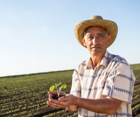 Hand holding seedlings of farmers Stock Photo 03