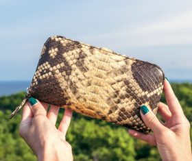High-end ladies brand wallet Stock Photo