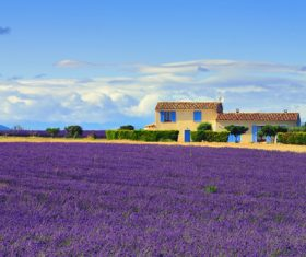 Lavender Town Provence Stock Photo 01