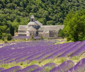 Lavender Town Provence Stock Photo 02