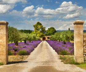 Lavender Town Provence Stock Photo 03