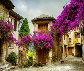 Lavender Town Provence Stock Photo 06