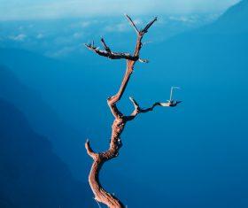 Leafless tree on blur mountain range landscape Stock Photo