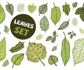 Leaves spring illustration vector set