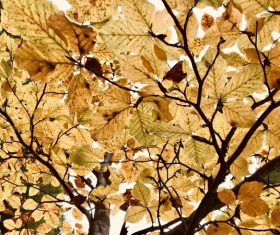 Luxuriant brown leaves on tree Stock Photo