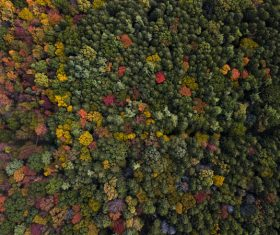 Luxuriant trees forest from high view Stock Photo