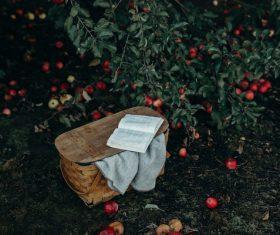 Open book in ripe apples garden Stock Photo