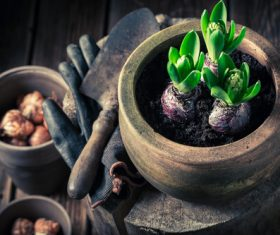 Potted vegetable Stock Photo 02