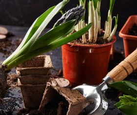 Potted vegetable Stock Photo 04