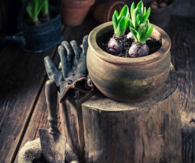 Potted vegetable Stock Photo 05