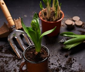 Potted vegetable Stock Photo 06
