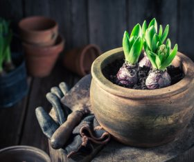 Potted vegetable Stock Photo 07