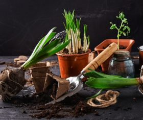 Potted vegetable Stock Photo 08