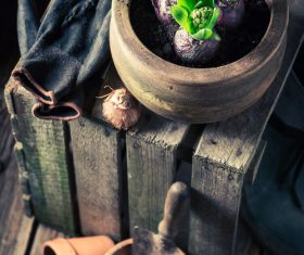 Potted vegetable Stock Photo 13