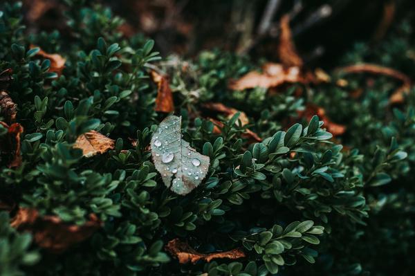 Raindrops on green leaf Stock Photo