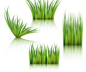 Realistic grass illustration vector material 01