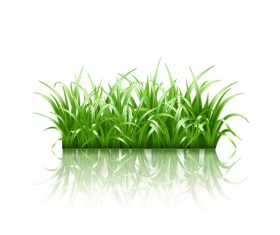 Realistic grass illustration vector material 02
