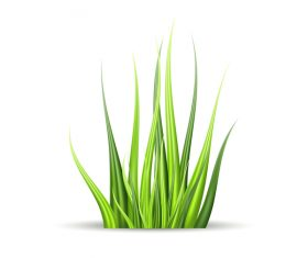 Realistic grass illustration vector material 03