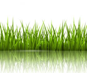 Realistic grass illustration vector material 04
