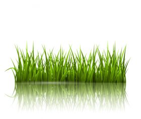 Realistic grass illustration vector material 05