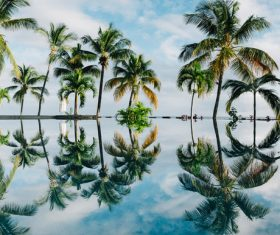 Reflection of coconut trees on swimming pool surface Stock Photo