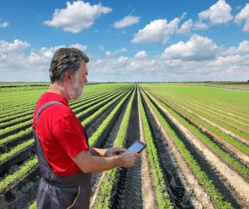 Science farming Stock Photo