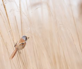 Small bird perching on grass Stock Photo