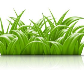 Summer green grass with water dorp illustration vector