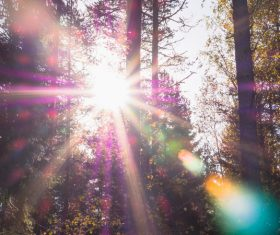 Sunlight in natural forest Stock Photo