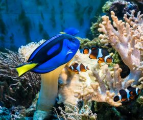 Tropical Fish and Colorful underwater reef Stock Photo 01