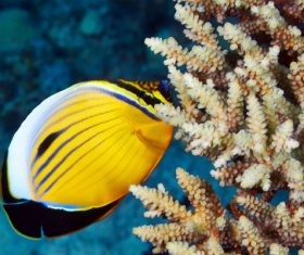 Tropical Fish and Colorful underwater reef Stock Photo 02