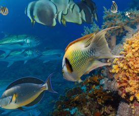 Tropical Fish and Colorful underwater reef Stock Photo 03