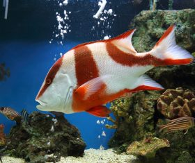 Tropical Fish and Colorful underwater reef Stock Photo 04