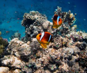 Tropical Fish and Colorful underwater reef Stock Photo 05
