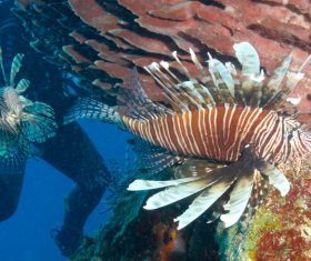 Tropical Fish and Colorful underwater reef Stock Photo 06