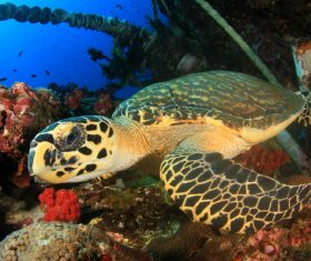 Turtles and Colorful underwater reef Stock Photo