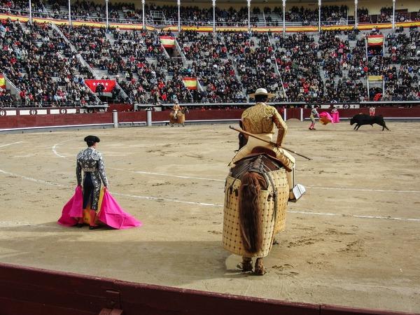 Watch the bullfighting audience Stock Photo 03